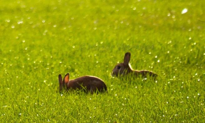 Big ears - the crop!