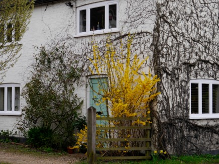 Forsythia cottage