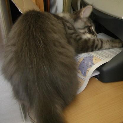 This printer's slow