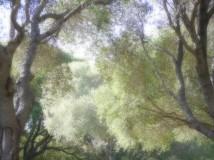 Campsite trees