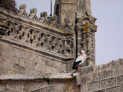 Stork church