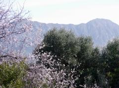 Sierra de Ronda
