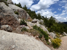 Living on the rocks