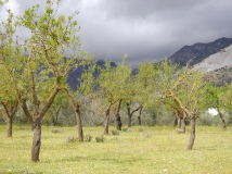 Orchard with altitude