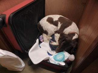 My suitcase in the spot where Sally's bed usually is!